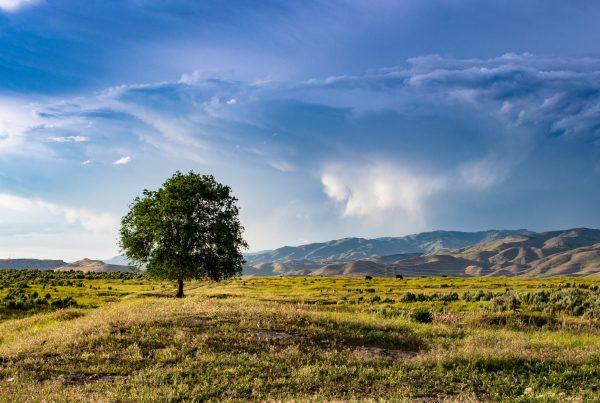 open-landscape-horizon